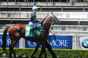Picture of race horse: Tucanchoo