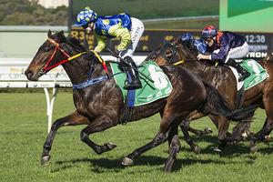 Picture of race horse: Rock On Zariz