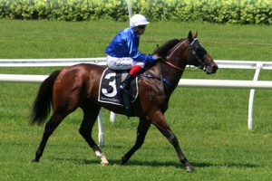 Picture of race horse: Tessera