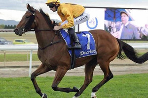 Picture of race horse: Sir Plush