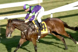 Picture of race horse: Invincible Knight