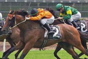 Picture of race horse: Admiral Jello