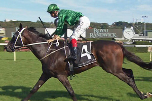 Picture of race horse: Sizzling Bullet