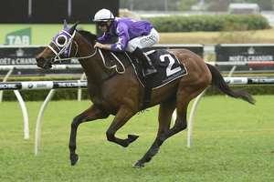 Picture of race horse: Invincibella