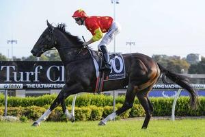 Picture of race horse: Calanda