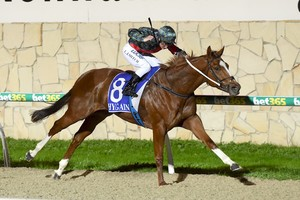 Picture of race horse: All in the Reflexs