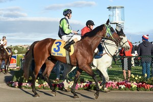 Picture of race horse: Pakaya Prince