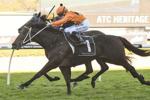 Picture of race horse: Sound Proposition