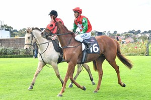 Picture of race horse: Northern Journey