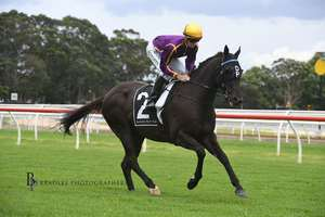 Picture of race horse: Ghostly