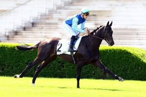 Picture of race horse: Sarrasin