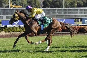 Picture of race horse: Gold Standard