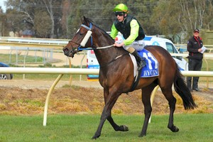 Picture of race horse: Coral Coast