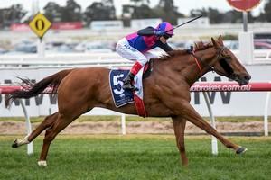 Picture of race horse: Vega Magic