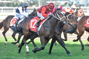 Picture of race horse: Jaminzah