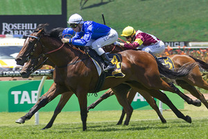 Picture of race horse: Souchez
