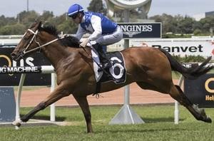 Picture of race horse: Bon Amis