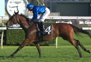 Picture of race horse: Istria