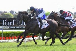 Picture of race horse: Kawaikini