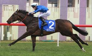 Picture of race horse: Eusebio