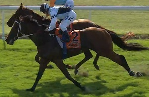 Picture of race horse: Invincible George