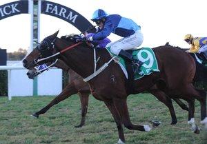Picture of race horse: Invicta