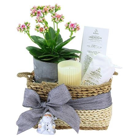 Kalanchoe Pamper Hamper SOLD OUT