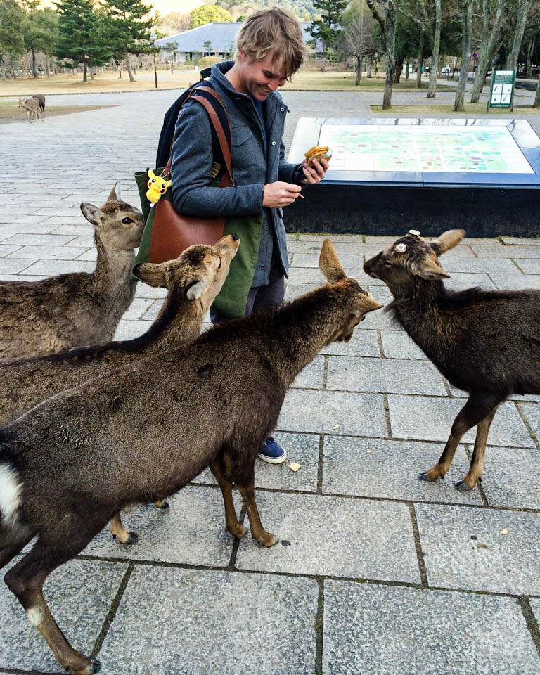 jwe-getting-mobbed-by-deer-9