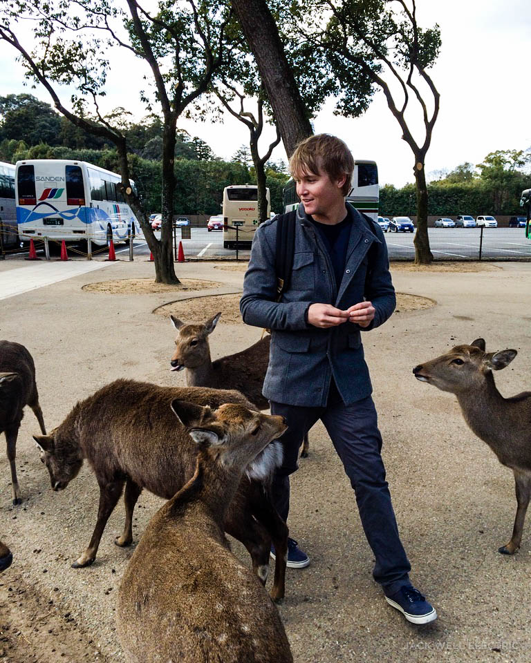 jwe-getting-mobbed-by-deer-2