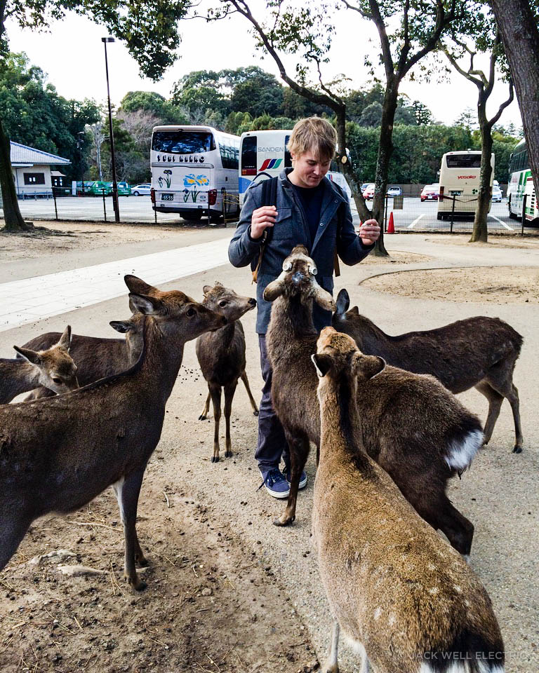 jwe-getting-mobbed-by-deer-1