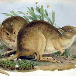 Parre kangaroorat cpd