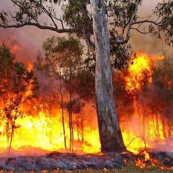 Bushfire 300sq
