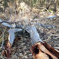 Paleng log fallentimber