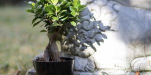 3 Clean-Air Friendly Plants to Have in Your House