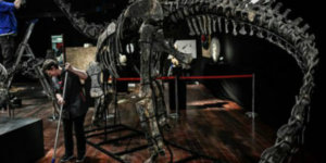 Dinosaur skeletons are the new pièce de résistance for your home