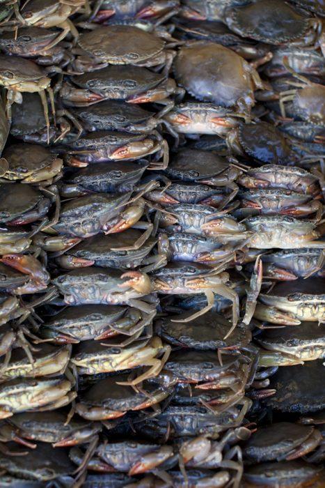 Vietnam1Crabsmass