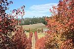 140 Forrest Road, PICKERING BROOK - $1.45m (2 homes on 9.8 fertile acres)