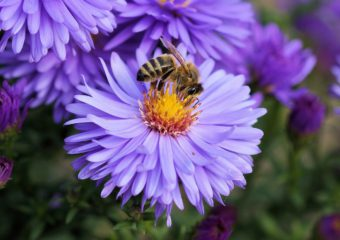 Bee 191629 1280