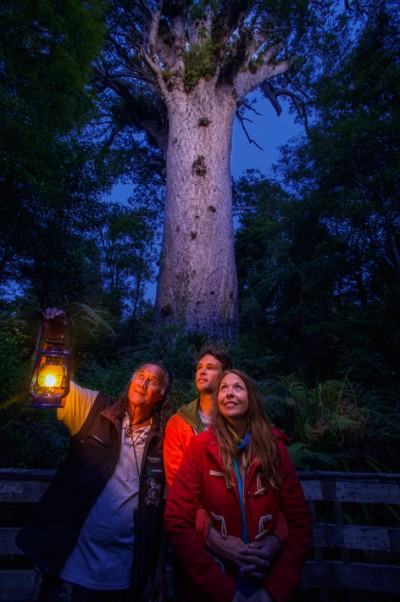 """Visitors with guide Bill Matthews from Footprints Waipoua – one of the experiences on the newly launched """"Ancient Kauri Trail"""" byway."""