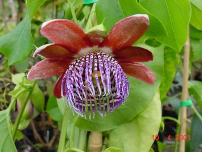 Wharepuke Subtropical Gardens