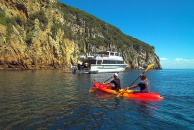 Sea Kayaking with Perfect Day Tutukaka