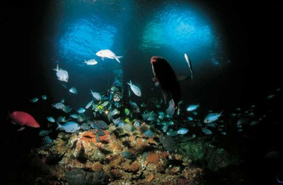 Diving among the fish, Rainbow Warrior