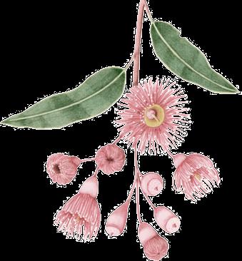 australian flower image