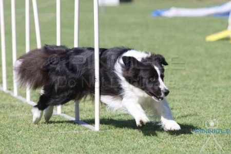 Border Collie Club - 11th October 2014