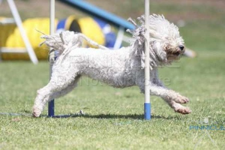 Agility Dog Club NSW - 25th October 2014