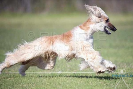 Lure Coursing Fun Day Dogs NSW - 24th May 2015