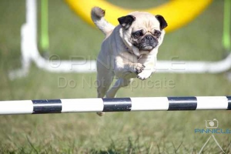 Manly - Agility - 4 July 2015