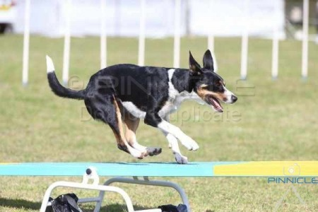 Festival of Agility - 5th September 2015