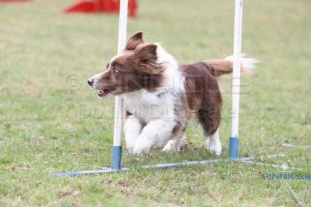 Festival of Agility - 6th September 2015