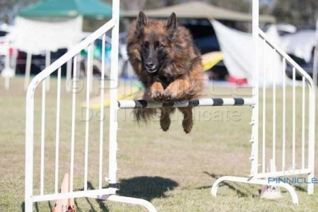 Spring Fair Agility - 27th August 2016